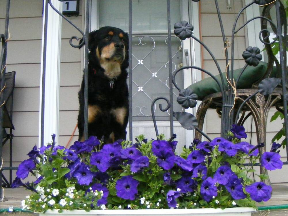 Molly & The Petunias